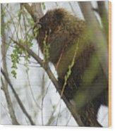 Porcupine Eating Leaves Wood Print