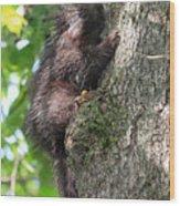 Porcupine In Sherbrooke Quebec Wood Print