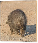 Porcupine Walking Wood Print