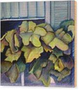 Port Norfolk Window Box Wood Print