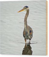 Port Townsend Blue Heron Wood Print