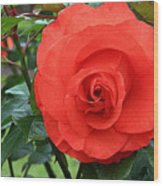 Portland Rose Garden Wood Print
