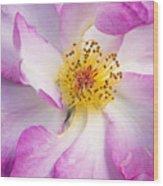 Portland Rose Wood Print