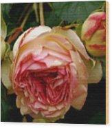Portland's Rose Garden Wood Print