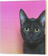Portrait Of A Black Kitten Wood Print
