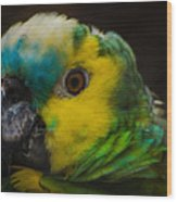 Portrait Of A Blue-fronted Parrot Wood Print