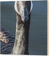 Portrait Of A Canada Goose Wood Print