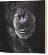Portrait Of A Chimpanzee Wood Print