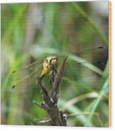 Portrait Of A Dragonfly Wood Print