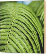 Portrait Of A Fern Wood Print