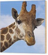 Portrait Of A Giraffe On The Background Of Blue Sky. Wood Print