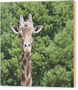 Portrait Of A Giraffe Wood Print