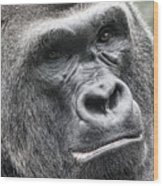 Portrait Of A Gorilla Wood Print by Jeff Swanson