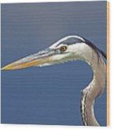 Portrait Of A Great Blue Heron Wood Print