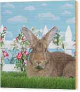 Portrait Of A Gregarious Brown Bunny Wood Print