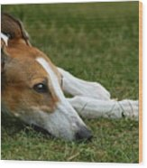 Portrait Of A Greyhound - Soulful Wood Print