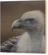 Portrait Of A Griffon Vulture Wood Print