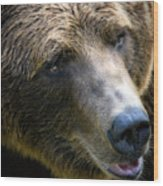 Portrait Of A Grizzly Wood Print