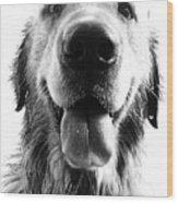 Portrait Of A Happy Dog Wood Print