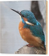 Portrait Of A Kingfisher Wood Print