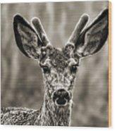 Portrait Of A Male Deer II Wood Print