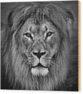 Portrait Of A Male Lion Black And White Version Wood Print
