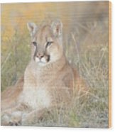 Portrait Of A Mountain Lion Wood Print