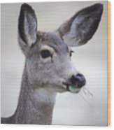 Portrait Of A Mule Deer Wood Print