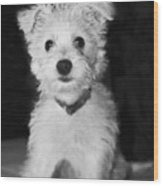 Portrait Of A Puppy In Black And White Wood Print