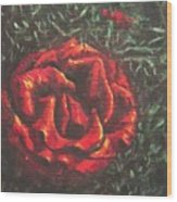 Portrait Of A Rose 6 Wood Print