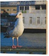 Portrait Of A Seagull Wood Print