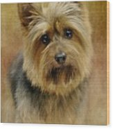 Portrait Of A Silky Terrier Wood Print by Stephanie Calhoun