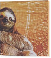 Portrait Of A Sloth Pet Looking In The Camera Wood Print