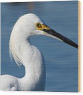 Portrait Of A Snowy Egret Wood Print
