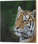 Portrait Of A Tiger Wood Print