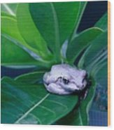 Portrait Of A Tree Frog Wood Print