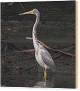 Portrait Of A Tri-colored Heron Wood Print