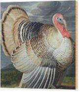 Portrait Of A Turkey  Wood Print