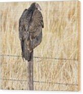 Portrait Of A Vulture Wood Print