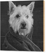 Portrait Of A Westie Dog 8x10 Ratio Wood Print