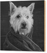 Portrait Of A Westie Dog Wood Print