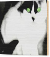 Portrait Of A White Cat Wood Print