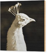 Portrait Of A White Peacock Wood Print
