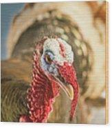 Portrait Of A Wild Turkey Wood Print