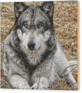 Portrait Of A Wolf Wood Print
