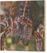 Portrait Of A Wolf Spider Wood Print