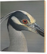 Portrait Of A Yellow Crowned Heron Wood Print