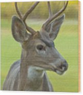 Portrait Of A Young Buck Wood Print