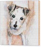 Portrait Of Abby - Jack Russell Terrier Wood Print