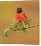 Portrait Of An Oriole Wood Print